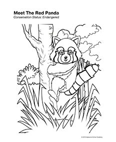 red panda coloring page awesome animal academy